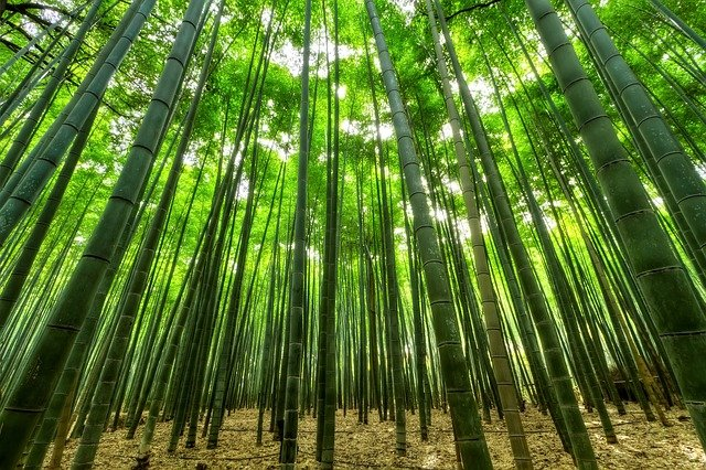 5 zalet używania tkaniny bambusowej do bielizny męskiej